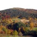 Lasy - Milówka